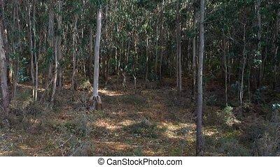 eucalyptus forest undergrowth close-up 4k video