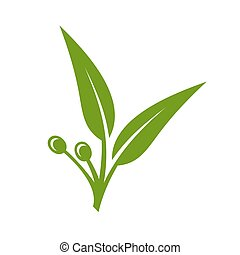 Eucalyptus Green Leaves Icon on White Background. Vector illustration