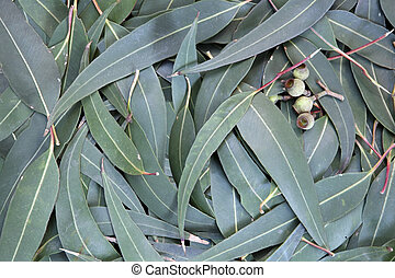 Eucalyptus leaves and gumnuts form a full-frame background.