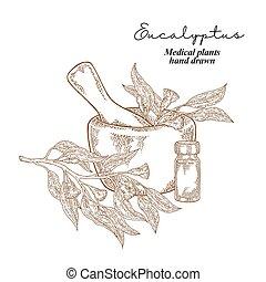 eucalyptus, monde médical, leaves., illustration, main, herbes, vecteur, fleurs, drawn., set.