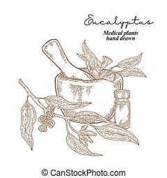 eucalyptus, monde médical, leaves., illustration, main, vecteur, fleurs, drawn., set., pantalon