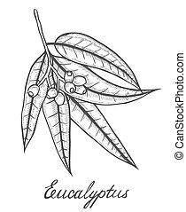 Eucalyptus plant branch - Hand drawn Eucalyptus plant, leaf,...