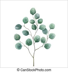 Eucalyptus silver dollar. Watercolor vector illustration in mint blue-green tones. Herbal design for textile and background