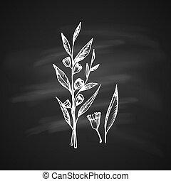 Eucalyptus - The white silhouette of the leaves eucalyptus...