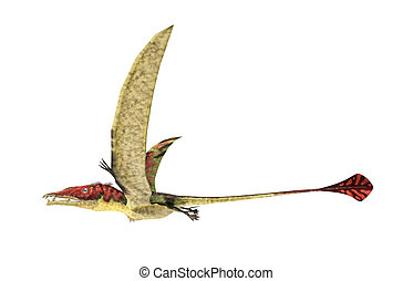 Eudimorphodon flying prehistoric reptile, photorealistic representation, scientifically correct. Side view, On white background. Clipping path included.