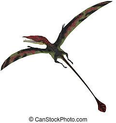 Eudimorphodon on White