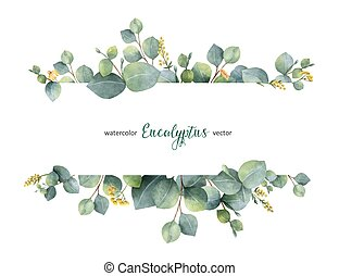 eukaliptusz, elágazik, háttér., vektor, transzparens, dollár, vízfestmény, virágos, zöld, elszigetelt, fehér, ezüst, zöld