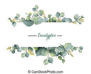 eukalyptus, grenverk, bakgrund., vektor, baner, dollar, vattenfärg, blommig, bladen, isolerat, vit, silver, grön