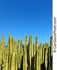 Euphorbia canariensis Canary Island spurge Hercules club cardón succulent naboom