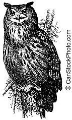 eurasiático, eagle-owl, pájaro