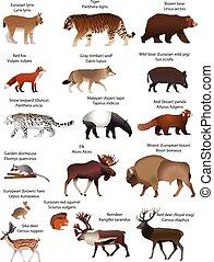 eurasia, animais
