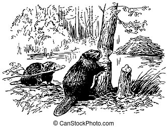 Eurasian Beavers in the forest