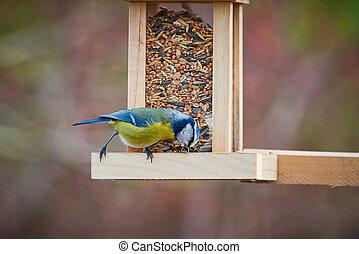 Eurasian blue tit bird eating seeds from a bird feeder