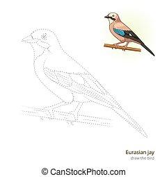 Eurasian jay bird learn to draw vector - Eurasian jay learn...