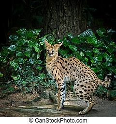 Eurasian Lynx (Lynx Lynx) - Lynx in green forest with the ...