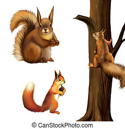 Red squirrel eating a cane, Baby squirrel, Eurasian red squirrel - Sciurus vulgaris (2 years) in front, Isolated on white background.