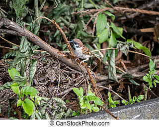 Eurasian tree sparrow perched on a branch 4