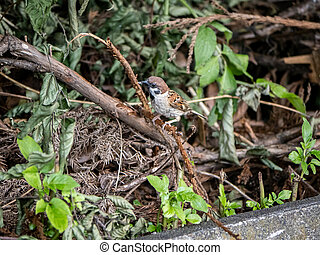 Eurasian tree sparrow perched on a branch 5