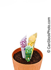Euro-bills growing out of pot - Euro-bills growing out of...