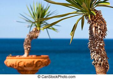 europa, cotta, italië, potten, bomen, terra, palm, achtergrond, oceaan