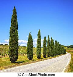 Europa, krajobraz, Droga, Włochy, cyprys, Drzewa,  Tuscany, winnica, Wiejski