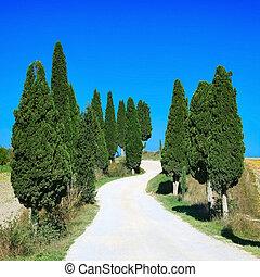europa, krajobraz, włochy, cyprys, tuscany, drzewa, łukowaty, wiejski, biały, droga