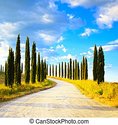 Europa, krajobraz, Włochy, cyprys,  Tuscany, Drzewa, Wiejski, biały, Droga