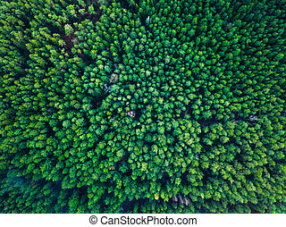 europa, lituania, sfondo verde, albero