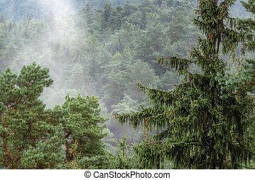 europa, perspectiva general, árbol, brumoso, conífera, forested, tapas, montaña