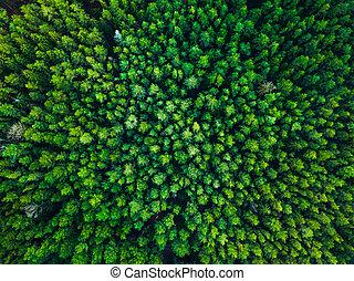 europe, 立陶宛, 绿色的背景, 树