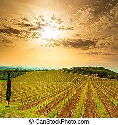 europe., boerderij, chianti, tuscany, bomen, wijngaard, italië, gebied, sunset.