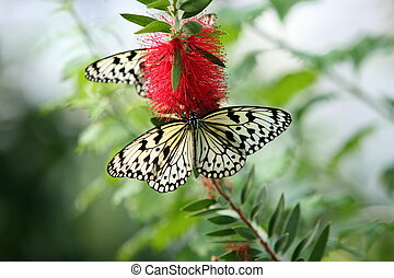 EUROPE FRANCE ALSACE - the Butterfly parc in the village of...