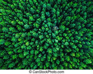 europe, lituanie, arrière-plan vert, arbres