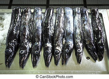 EUROPE PORTUGAL MADEIRA FUNCHAL FISHMARKET - Blach scabbart...