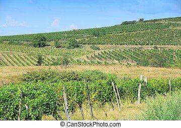 Europe wine region