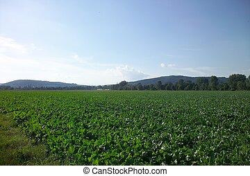 European Agriculture