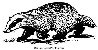 European Badger running