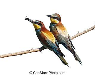 European Bee eater isolated