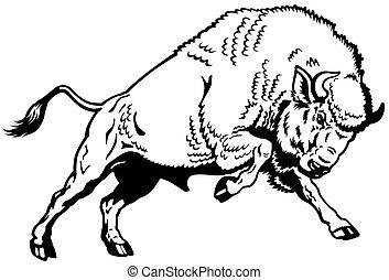 european bison black white - wisent european bison,attacking...