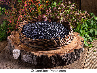European blueberry