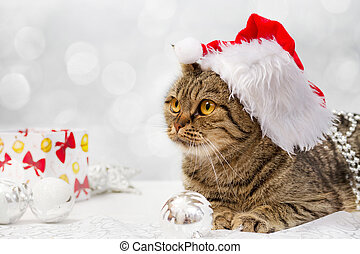 European cat with Christmas decorations