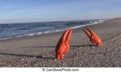 European crayfish pincers on the beach in the sand -...
