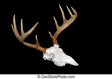 European Deer Mount Angled - An angled view of a european...