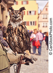 european eagle owl sitting on handler's hand