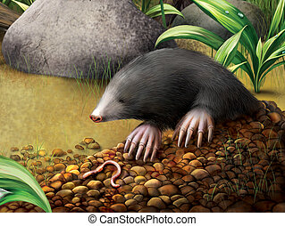 animal Mole in molehill, Talpa europaea.
