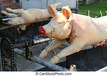 European Pigs on a rotisserie grill ready to be barbecued