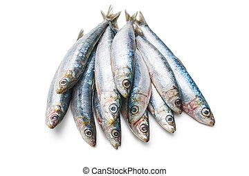 European pilchard - Fresh raw sardines isolated on white...