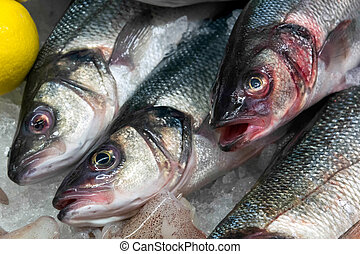 European Seabass (Dicentrarchus labrax) for sale