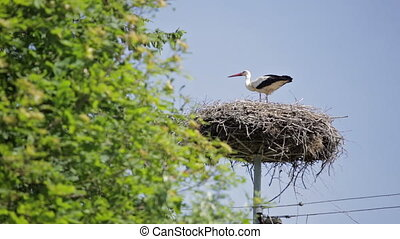 European stork in his nest on top of high voltage...