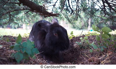 European Wild rabbit (Oryctolagus cuniculus) in lovely green vegetation surroundings sits under a tree